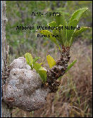 Ant-Plants: Arboreal Wonders of Nature